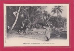 MARTINIQUE-GUADELOUPE - ARICULTURE - PLANTATIONS - La Cueillette Des Cocos - Animation - Guadeloupe