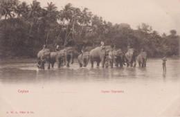 "ASIE SRILANKA CEYLON COLOMBO  "" Ceylon Elephants  "" - Sri Lanka (Ceylon)"