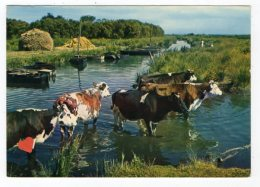 "10779-LE-44-Image De La Grande Brière -"" Le Gué ""------------troupeau De Vaches - Sin Clasificación"