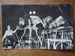 DIVERS - CIRQUE : Les Frères FRANCKI - Dompteur Fredy HAGER Et Son Groupe De Lions De L' Atlas - Cirque