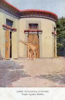 GIRAFE(ANVERS) - Girafes