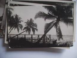 Maleisië Malaysia Malaya With Palm Trees - Maleisië