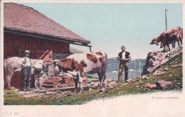Croquis Alpestre, Troupeau, Chalet Et Pâturage (cpn 46) - Elevage
