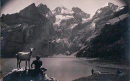 Chèvre Et Chevrier, Oschinensee Kandersteg (6173) - Animaux & Faune