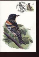 Belgie Buzin Vogels Birds 2921 Maximumkaart RR 6/5/2000 Gembloux - 1985-.. Oiseaux (Buzin)