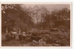 Ecosse - Five - A Highland Gathering , Near Balquhidder -  Achat Immédiat - Fife