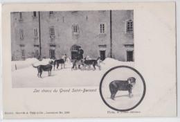 Les Chiens Du Grand Saint-Bernard - Flora, La Bonne Chienne - Chien Nommé - Dog - VS Valais
