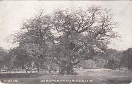Major Oak - Age 1500 Years - Girth 35 Feet - Base 64 Feet - Sherwood Forest England - Written - 2 Scans - Trees