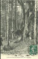 Le Fau De La Dame Dans Les Bois Noirs Pres La Madeleine - Frankreich