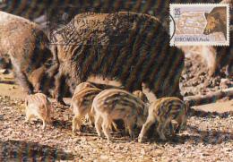 50186- WILD BOAR, PIGLETS, MAXIMUM CARD, 1985, ROMANIA - Sellos