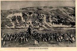 Eiersammeln In Der Pinguinkolonie  /  Druck Aus Zeitschrift , 1902 - Zeitungen & Zeitschriften