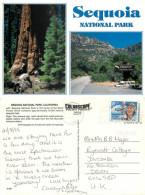 Sequoia National Park, California, United States US Postcard Posted 1998 Stamp - Etats-Unis