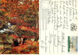 Flamboyant Tree, Mauritius Postcard Posted 1976 Stamp - Mauritius