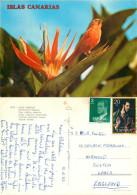 Orange Bird, Strelitzia Flower, Tenerife, Spain Postcard Posted 1983 Stamp - Tenerife