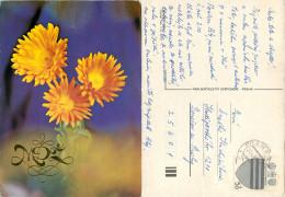 MDZ - International Women's Day, Flowers, Czech Republic Postcard Posted 1980 Stamp - Czech Republic