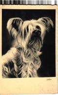 GRIFFON   REF 49262 - Cani