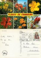 Wild Flowers, Tenerife, Spain Postcard Posted 1977 Stamp - Tenerife