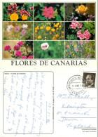 Wild Flowers, Tenerife, Spain Postcard Posted 1994 Stamp - Tenerife