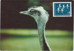 Birds On Stamps.Maximum Cards.MK.Bulgaria - Oiseaux