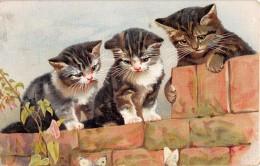"04908 ""3 GATTI- CATS - KOTY - KATES -MYYP - KEDI - GATOS""  CART SPED 1918 - Gatti"
