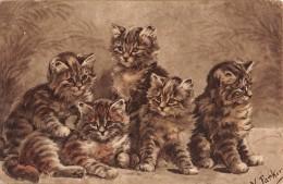 "04909 ""5 GATTI- CATS - KOTY - KATES -MYYP - KEDI - GATOS""  FIRMATA N. PARKER. CART NON SPED - Gatti"