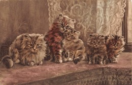 "04910 ""5 GATTI- CATS - KOTY - KATES -MYYP - KEDI - GATOS""  FIRMATA N. PARKER. CART NON SPED - Gatti"