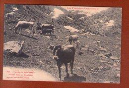 1 Cpa Vicdessos Vaches Dans La Montagne - Autres Communes