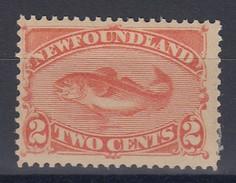 Terre Neuve - Newfoundland - 1887 - Poisson / Fish - No. SG 51* MH - Poissons