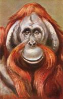 SINGE - Scimmie