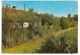 (85) Bourine - Bourrine Dans Le Marais Vendeen - Moulin Au Fond - France