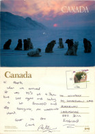 Sled Dogs, Canada Postcard Posted 1992 Stamp - Cartes Modernes