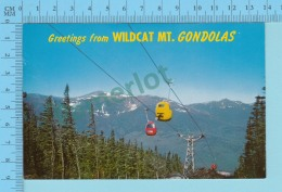 Greetings From - Wildcat Mt. Gomdolas - New Hampshire USA - 2 Scans - Souvenir De...