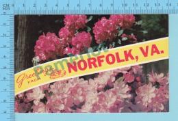 Greetings From   -Norfolk, Multiview  Flowers -  Virginia USA - 2 Scans - Souvenir De...