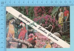 Greetings From -  Sunken Gardens St. Petersburg , Multiview   - Florida USA - 2 Scans - Souvenir De...