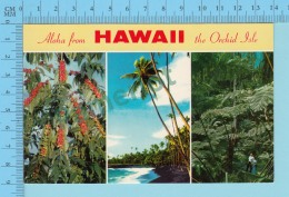 Alowa From - Hawaii, The Orchid Isle, Multiview -  USA - 2 Scans - Souvenir De...