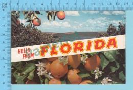 Hello From - Florida, Multiview -  USA - 2 Scans - Souvenir De...