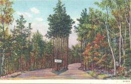 ETATS UNIS - UNITED STATES OF AMERICA - WISCONSIN - The Twelve Apostles Skyline Trail Peninsula State Park Door County - Etats-Unis