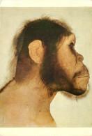 Anonymous, Australopithecus, Art Painting Postcard Unposted - Malerei & Gemälde