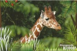 Netherlands - Postal Stationary - Entier - 2007 : Zoo Blijdorp : Giraffe