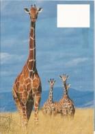 New Zealand - Postal Stationary - Entier  1994 : Giraffe