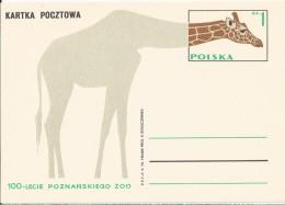 Poland - Postal Stationary - Entier  1973 : Giraffe