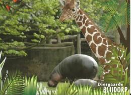 Netherlands  - Postal Stationary - Entier  Blijdorp Zoo 2007 : Giraffe En Dwarf Hippopotamus