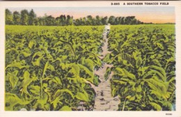 A Southern Tobacco Field - Tabaco