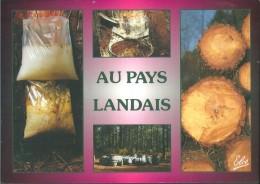 ! - France - Au Pays Landais - Récolte De La Résine - Non Classés