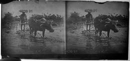 Photographie - Plaque De Verre - Début 20e - Indochine, Paysan Et Bufle à La Tâche (B 513-1, Lot 2) - Diapositiva Su Vetro