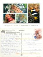 Fish, Ningaloo Reef, Western Australia, Australia Postcard Posted 2012 Stamp - Australie
