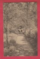 Binche -Maison Des Soeurs De La Charité De N-D De Bonne Espérance - Une Allée Du Jardin ( Voir Verso ) - Binche
