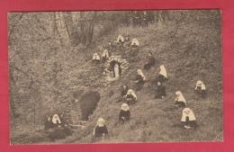 Binche -Maison Des Soeurs De La Charité De N-D De Bonne Espérance - Grotte N-D De Lourdes ( Voir Verso ) - Binche