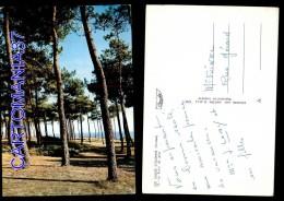 3854-85-4890      Les Sables D'olonne, La Forêt De Pins - Sables D'Olonne