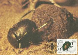 South West Africa SWA 1987 Insects,16c Garreta Nitens Maximum Card - South Africa (1961-...)
